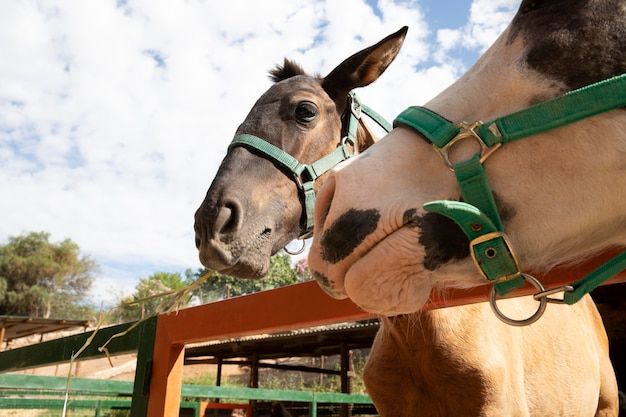 Adorable donkey outdoors at the farm