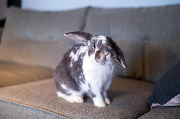 Очаровательный пушистый серый и белый пятнистый домашний кролик сидит на диване в гостиной