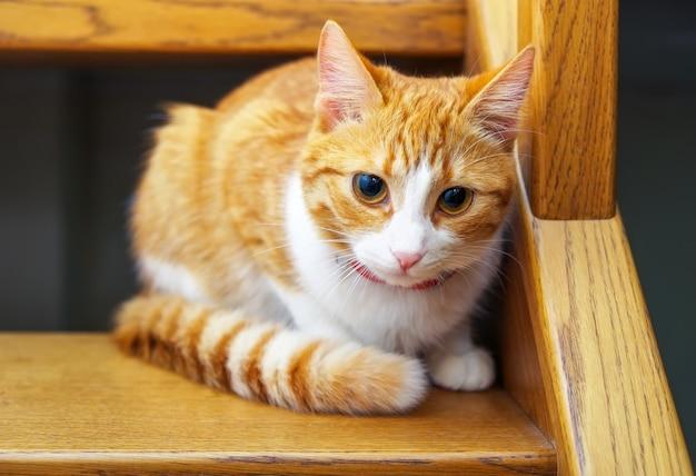 木製の階段に座っている愛らしい生姜子猫。階段を見下ろすオレンジ色の猫