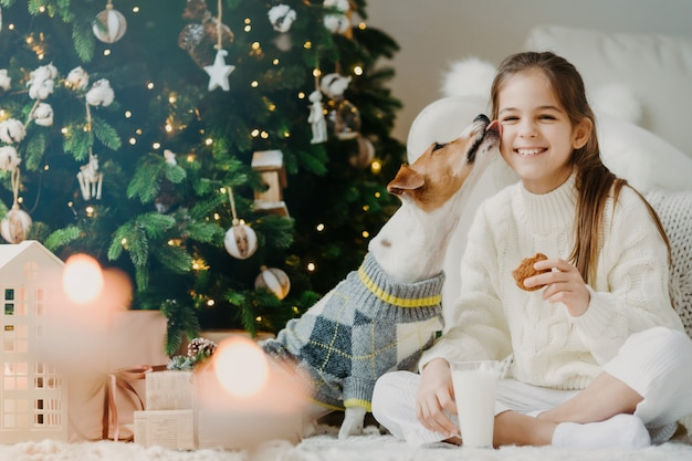 Adorable glad female child drinks milk and eats cookies, has wonderful time together with favourite dog, receives kiss from pet, sit near decorated christmas tree, has festive mood. winter holiday