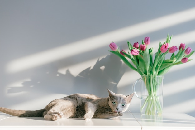 Adorable gray kitten lying on table with bouquet of tulips in glass vase.