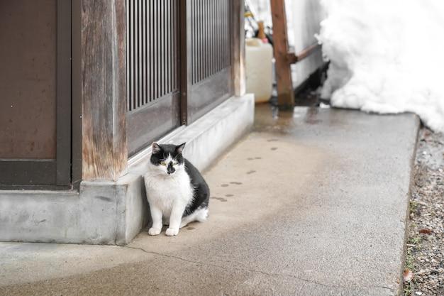 노란색 눈을 가진 사랑스러운 노숙자 일본 뚱뚱한 흑백 고양이는 나무 문 옆에 앉아 있고 뒤에는 눈이 있습니다.