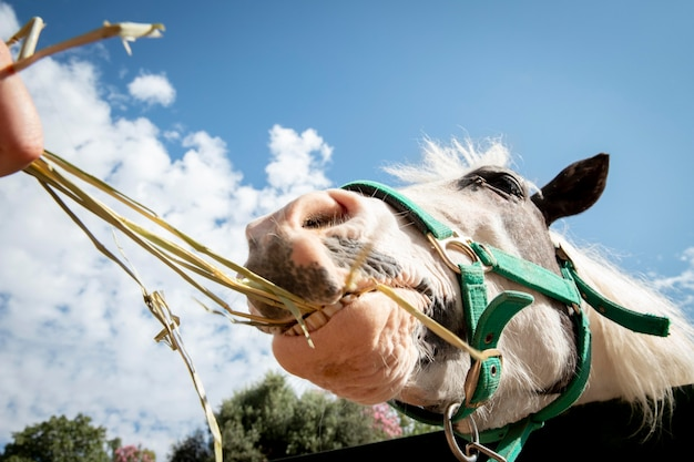 Adorabile cavallo alla fattoria all'aperto