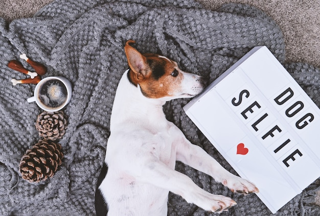 Adorable jack russell terrier dog and mood board