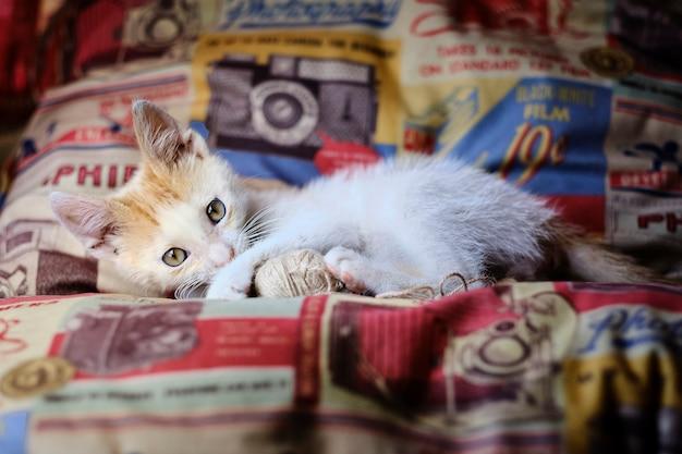 Очаровательный котенок, лежа на диване