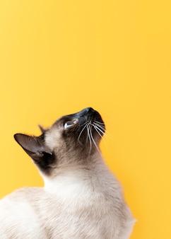 Очаровательная кошечка с монохромной стеной позади нее