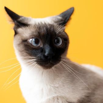 Adorabile gattino con parete monocromatica dietro di lei