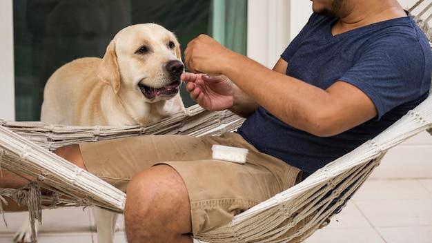 Adorable labrador dog wait for food