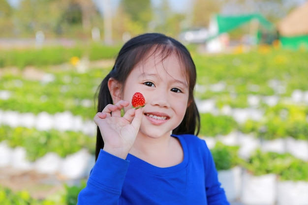 Adorable little asian child girl eating strawberry in field.