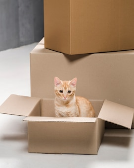 Adorable little cat inside of cardboard box