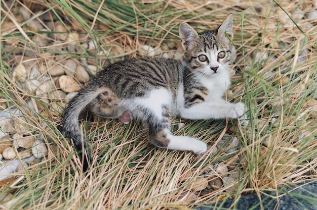Очаровательная маленькая кошка играет на открытом воздухе