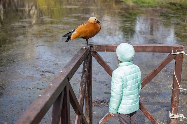 Очаровательная маленькая кавказская девушка, глядя на озеро с уткой в парке весной. вид сзади