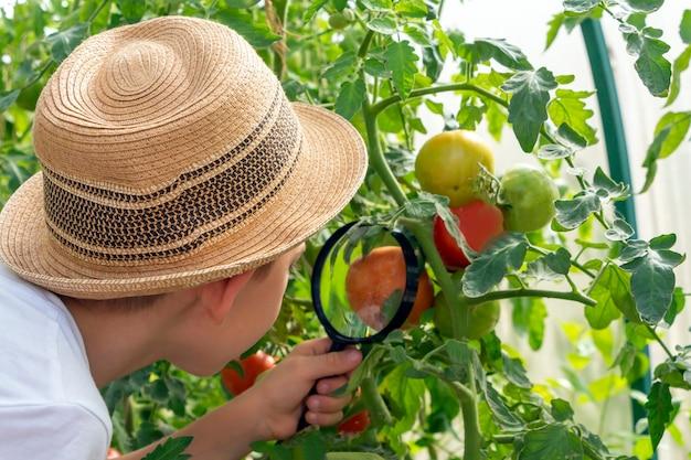 Прелестный маленький ребенок мальчик в соломенной шляпе смотрит на листья зеленого растения с лупой. ребенок наблюдает, исследует природу и окружающую среду. раннее развитие и навыки. юный натуралист.