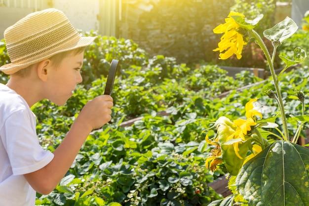 麦わら帽子をかぶった愛らしい小さな男の子は、虫眼鏡で緑の植物の葉を見てください。自然と環境を観察し、探索する子供。初期の開発とスキル。若い博物学者。