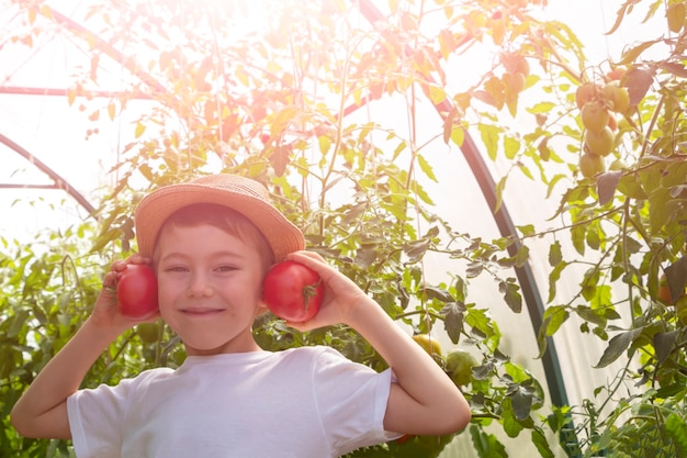 Adorable little child boy in straw hat hold tomatoes in greenhouse. kid gardening and harvesting. consept of healthy organic vegetables for kids. children's vegetarianism