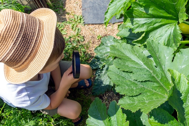Adorable little child boy in straw hat look at green plant leaves with magnifying glass. kid observing, exploring nature and environment. early development and skills. young naturalist,