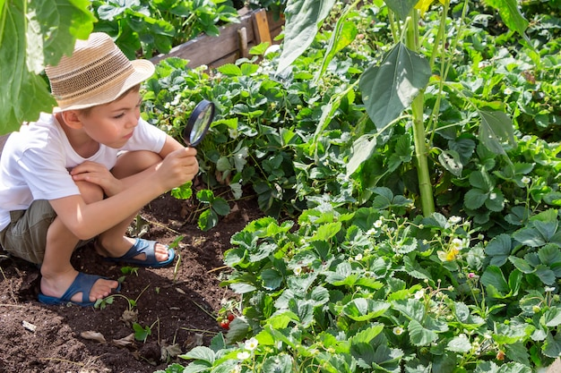 Adorable little child boy in straw hat look at green plant leaves with magnifying glass. kid observing, exploring nature and environment. early development and skills. young naturalist