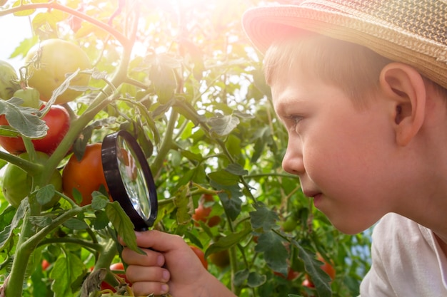 Adorable little child boy in straw hat look at green plant leaves with magnifying glass. kid observing, exploring nature and environment. early development and skills. young naturalist.