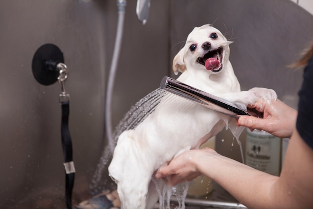 Adorable little dog being washed at grooming salon