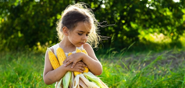 Adorable little girl playing in a corn field on beautiful autumn day. pretty child holding a cob of corn. harvesting with kids. autumn activities for children.