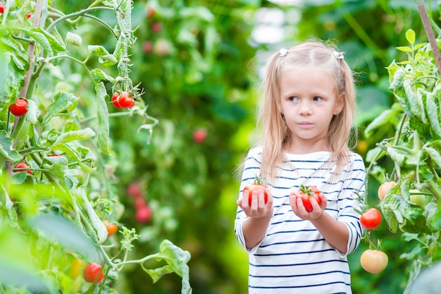 Adorable little girl with harvests of tomatoes in greenhouse.