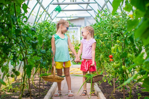 Adorable little girls collecting crop cucumbers and tomatoes in greenhouse