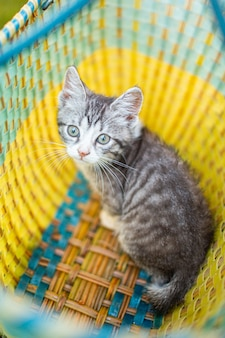 Adorable little gray kitten in the garden on the green grass in the basket.