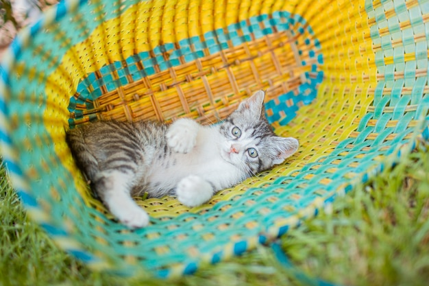 Adorable little gray kitten in the garden on the green grass in the basket