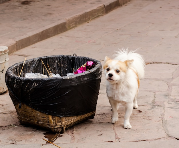 Adorable little puppy near a garbage can
