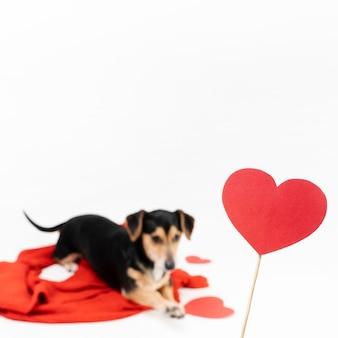 コピースペースを持つ愛らしい子犬