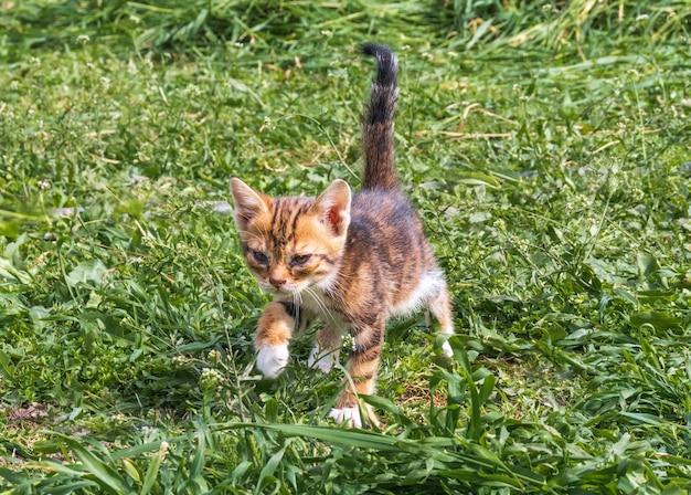 야외에서 사랑스러운 야옹 얼룩 고양이