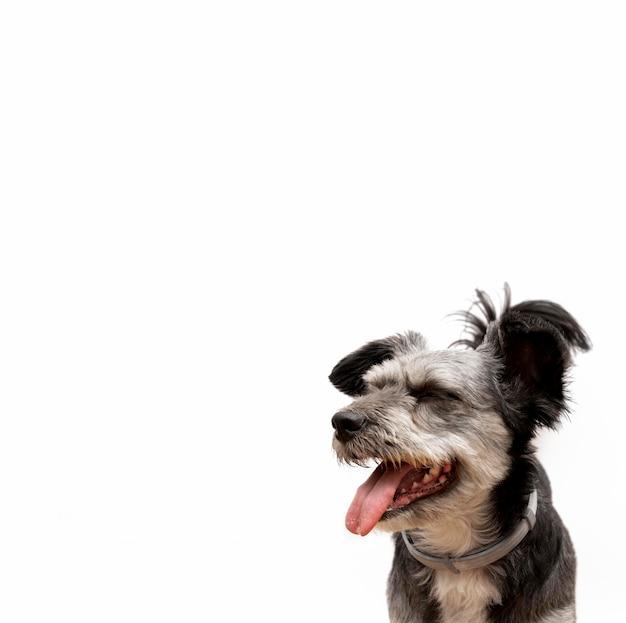 Adorabile cucciolo di razza mista con la bocca aperta guardando a sinistra con lo spazio della copia