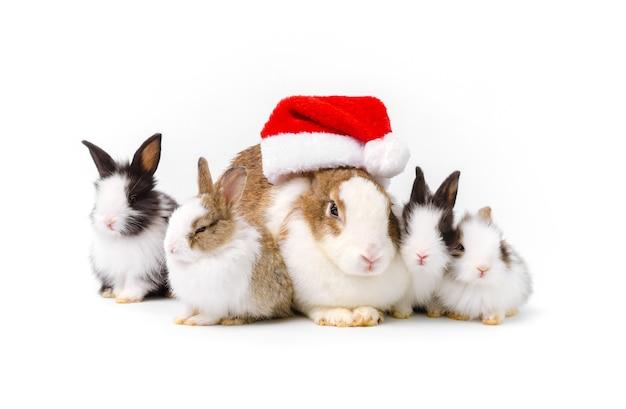 빨간 크리스마스 모자를 쓴 사랑스러운 어머니 토끼와 흰색 배경에 앉아 있는 네 명의 갓 태어난 토끼. 크리스마스 토끼 애완 동물 가족과 함께 휴가를 축하