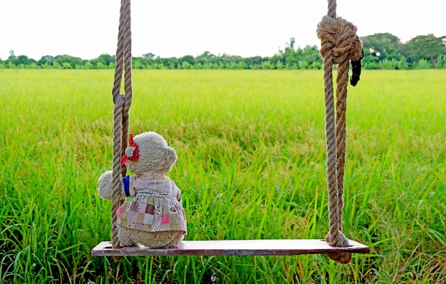 Adorable polar bear soft toy sitting on wooden swing with paddy fields in the backdrop