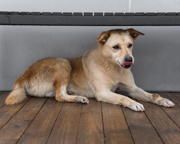 Очаровательная собака-спасатель в приюте ждет своего усыновления