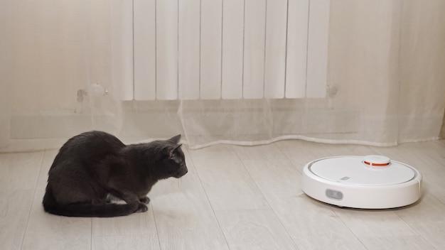 愛らしい怖い黒猫は、明るい部屋のクローズアップのカーテンの後ろのヒーターの近くの木の床を掃除する白い丸いロボット掃除機を見ます