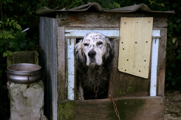 Adorable shetter dog in its wooden house