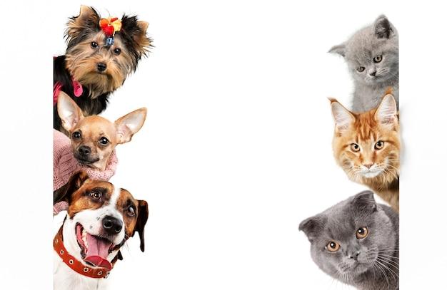 사랑스러운 6마리의 개와 고양이