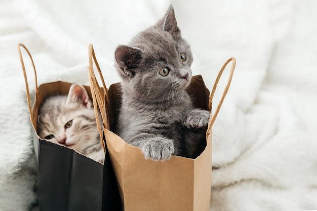 사랑스러운 작은 얼룩 고양이가 종이 쇼핑백에 숨어 있습니다. 고양이는 종이 봉지 밖으로 보인다. 패키지 깜짝 발렌타인 데이 새끼 고양이에 선물입니다. 판매 구매 개념입니다.