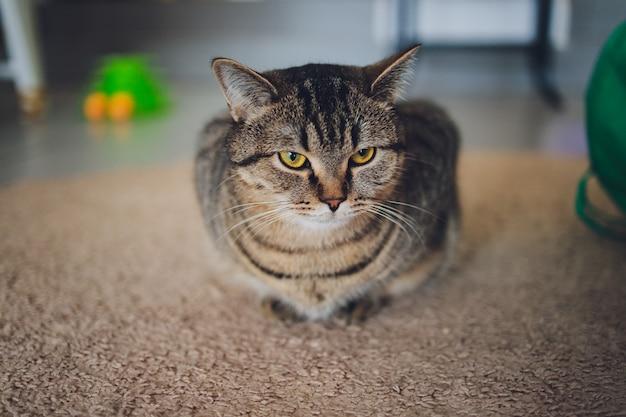 カメラを見つめて台所の床に座っている愛らしいぶち猫。