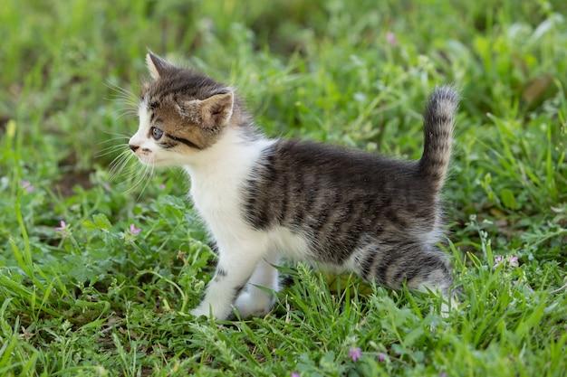 푸른 잔디에 야외에서 걷는 귀여운 줄무늬 고양이
