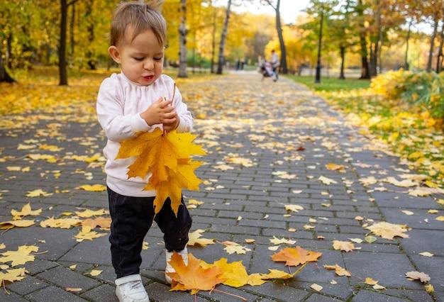 Очаровательны малыш играет с упавшими кленовыми листьями в осеннем парке. малыш несет маме букет из желтых кленовых листьев