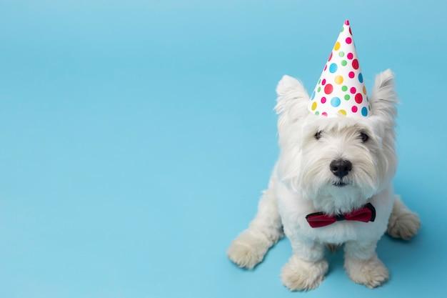 Очаровательная белая собака, изолированная на синем