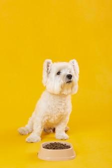Очаровательная белая собака, изолированная на желтом