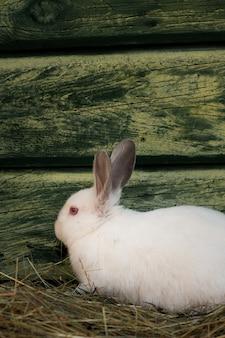 Очаровательный белый пасхальный кролик