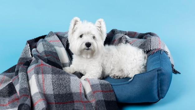 블루에 고립 된 사랑스러운 흰색 작은 강아지