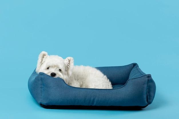 귀여운 흰색 작은 강아지