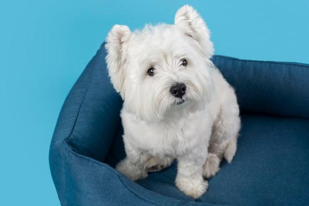 愛らしい白い子犬