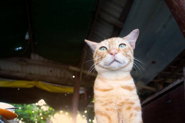 오래 된 지붕에서 편안한 녹색 눈을 가진 사랑스러운 노란 키티