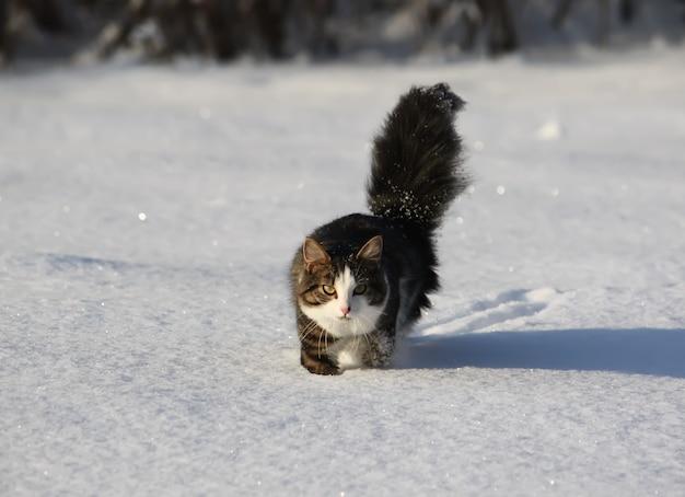 겨울에 눈밭 덮개에 푹신한 꼬리를 가진 사랑스러운 어린 고양이